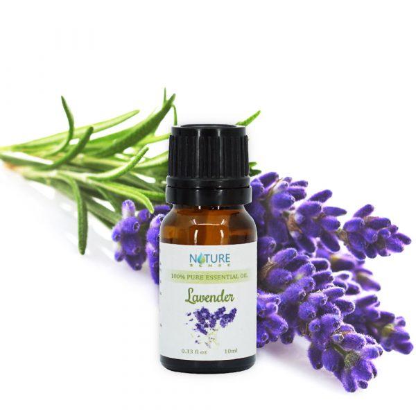 hoa oải hương - lavender